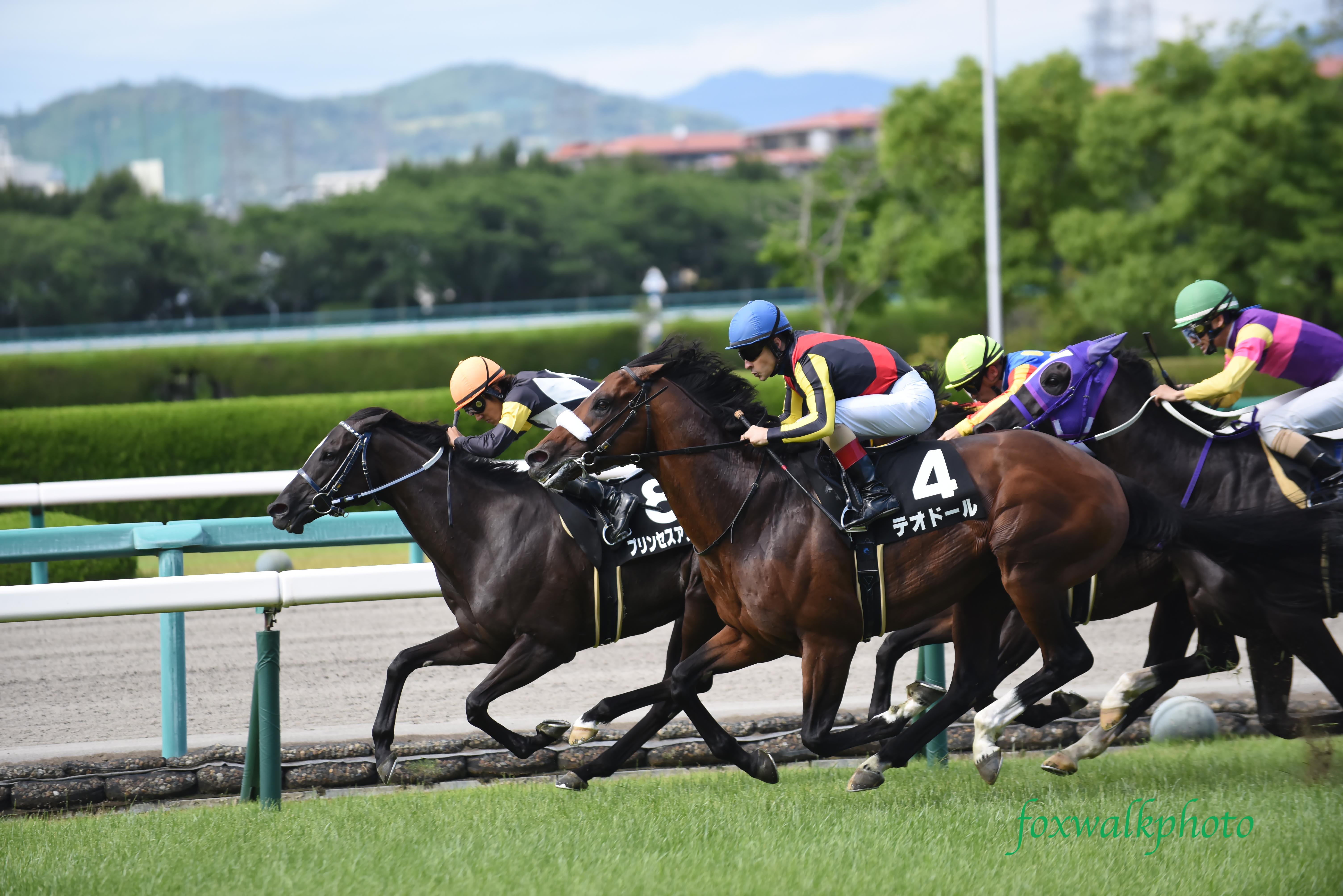 阪神競馬場で走る馬